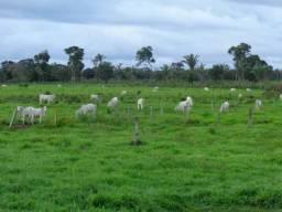 Fazenda 26 Alqueires Miranorte To
