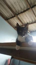 Dou um gatinho