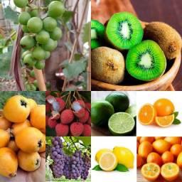 Mudas frutiferas para  o vaso