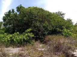 Terreno em Arembepe na Linha Verde