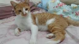 Lindo gato adolescente para adoção
