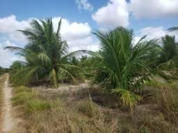Fazenda de coqueiros em vera cruz e são José de Mipibu