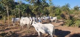 Fazenda - Nossa senhora do Livramento - 750 Hectares