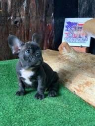 Título do anúncio: Mini Bulldog Frances Fêmea Black Exotica
