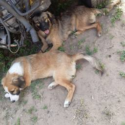Doação de 2 cachorros