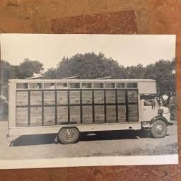 Vende-se Carroceria para Transporte de Equinos