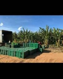 Fazenda com 50 hectares em touros com água em abundância