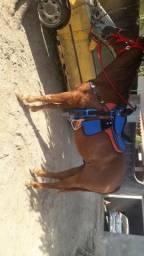 Cavalo quarto de milha