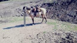 Vendo cavalo manso, pra que já tem um pouco da lida.