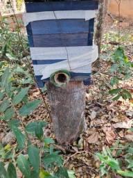 Título do anúncio: Caixa abelhas Tubuna