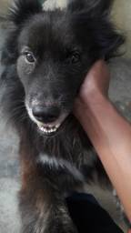 Estou doando este cão urgente