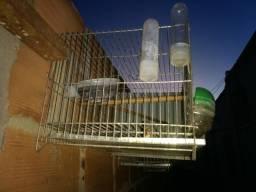 24 gaiolas. todas em otimo estado de conservação