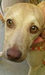 Doação (cadelinha)
