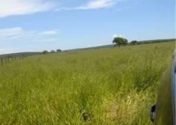Fazenda em Coxim - MS. 8.500 hectares.