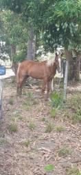 Vende-se dois Cavalos da Raça Campolina um cavalo e uma Égua