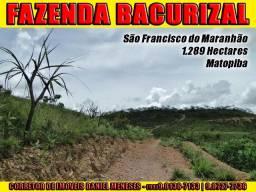 Fazenda Bacurizal | 1.289 Hectares | São Francisco do Maranhão | Matopiba