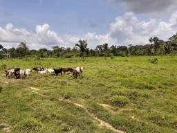 Título do anúncio: Execelente!! Área de 228 hectares sendo 130 formado ( título definitivo)