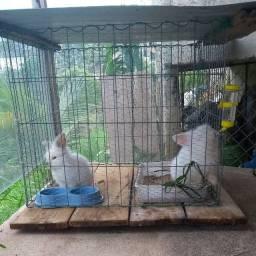 viveiro de galinha/ coelhos