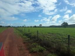 Fazenda 2.125 há (439 alq) melhor fazenda no norte do TO para o Agronegócio