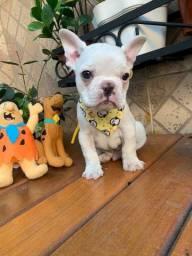 Filhote Bulldog