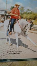 Cavalo Mangalarga Mineiro Marchador