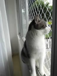 Gatos, precisam de telas de proteção