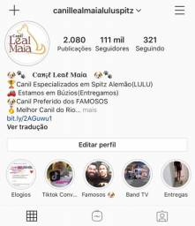 Canil Leal Maia / Canil Mais famoso do Rio / O preferido / Spitz / Lulu