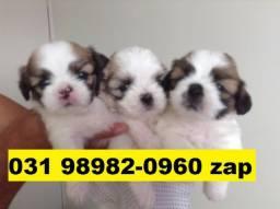 Canil Líder Filhotes Cães BH Lhasa Poodle Beagle Basset Maltês Yorkshire Shihtzu Fox