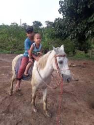 Cavalo pitisco