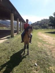 Vendo cavalo mangalarga Machado