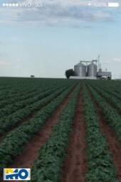 Fazenda na BAHIA , MATO GROSSO , MA , TO , PA outras Regiões Soja e pecuár