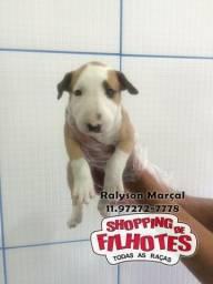 Bull Terrier Branco,Pirata,Tigrado,Mascarado,Fulvo,Black-White, padrão CBKC