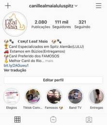 Canil Mais famosos do Rio / Canil Leal Maia / O preferido / Spitz / Lulu