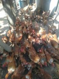 Adquira já sua galinha