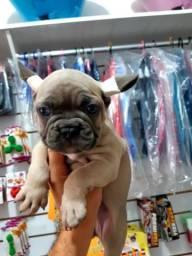 Bulldog francês disponível a partir de 1.000,00