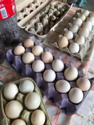 Ovos caipira e de pato
