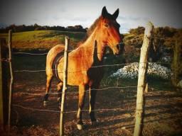 Vendo Cavalo Bem Manso