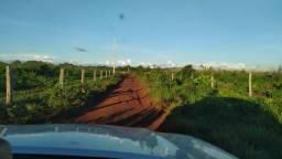 [Terra Boa] 310 Alq. p/ Lavoura no Sul do Pará