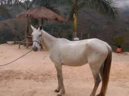 Vende-se ou troco Égua R$2.000