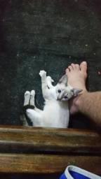 Gato - doação