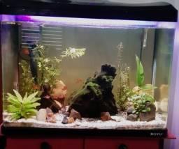 Aquario Boyu Completo 66L