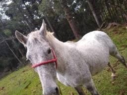 Venda-se cavalo manso