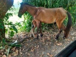 Cavalo + egua prenha + potro