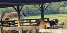 Área de terra cercada para bovinos