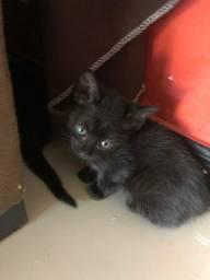 doação de gatinhos já pegue já o seu