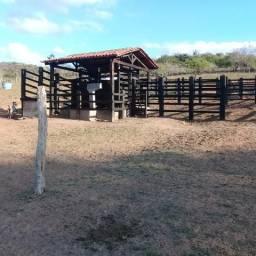 Excelente fazenda de 700 tarefas a 80 km de Feira de Santana