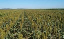 Arrendamento Fazenda 2500 ha