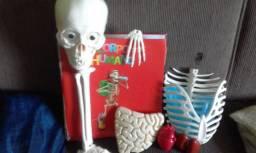 Um esqueleto mais fichario