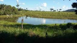Fazenda em Novo Progresso Pará x Permuta Fazenda Parana