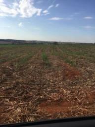 Fazenda Região da cana | 26 Alqueires | Oportunidade Única